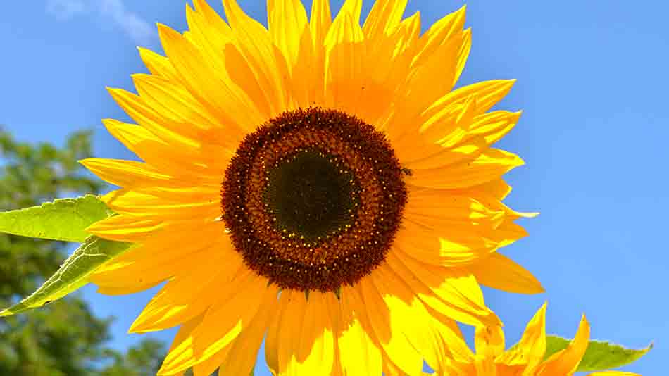 bright image of a flower
